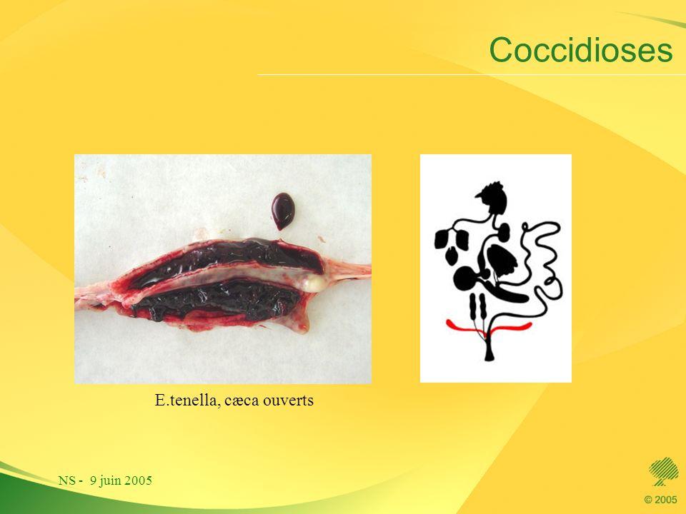 Coccidioses E.tenella, cæca ouverts NS - 9 juin 2005