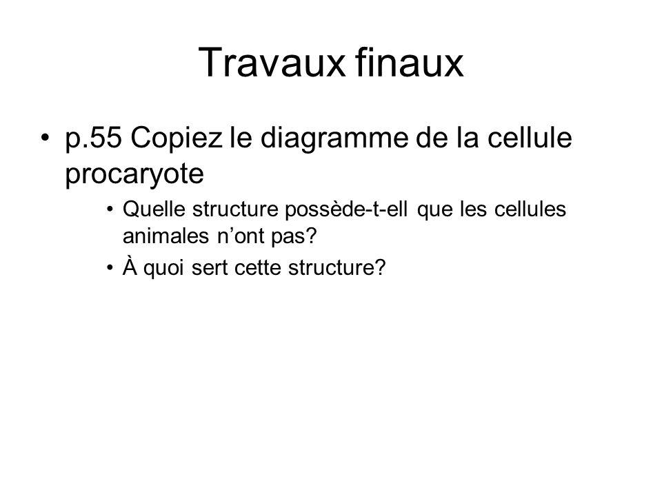 Travaux finaux p.55 Copiez le diagramme de la cellule procaryote