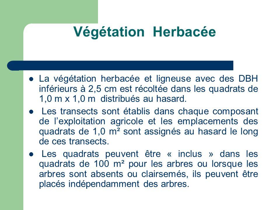 Végétation Herbacée