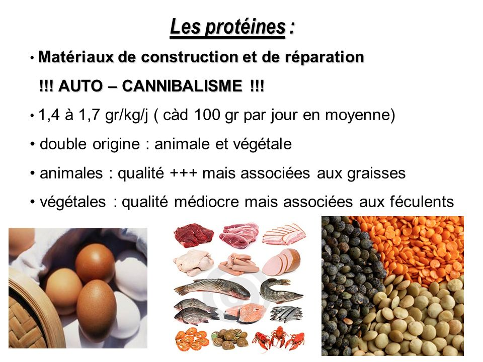 Les protéines : !!! AUTO – CANNIBALISME !!!