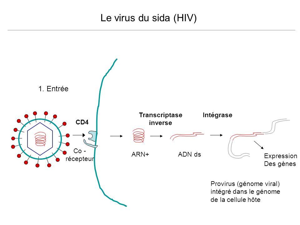 Le virus du sida (HIV) 1. Entrée Transcriptase inverse Intégrase CD4