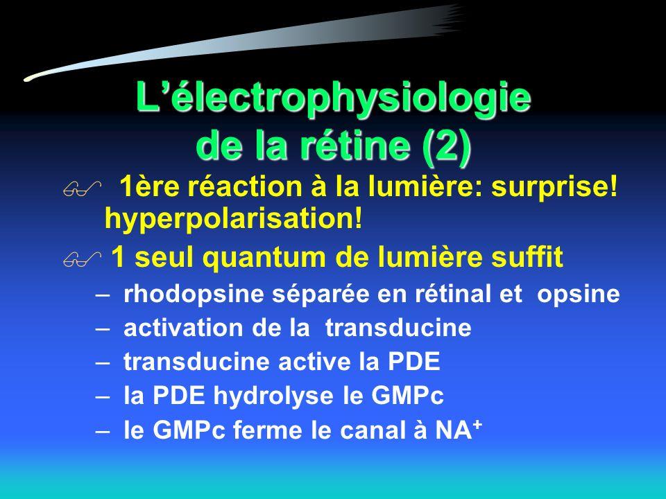 L'électrophysiologie de la rétine (2)