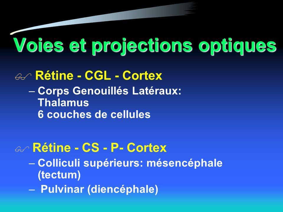 Voies et projections optiques