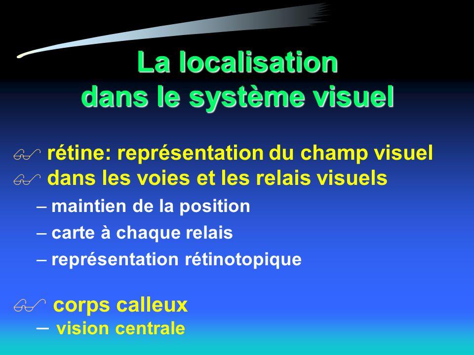 La localisation dans le système visuel