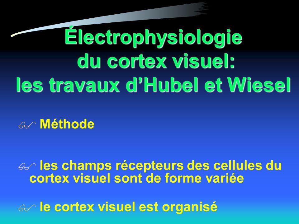 Électrophysiologie du cortex visuel: les travaux d'Hubel et Wiesel