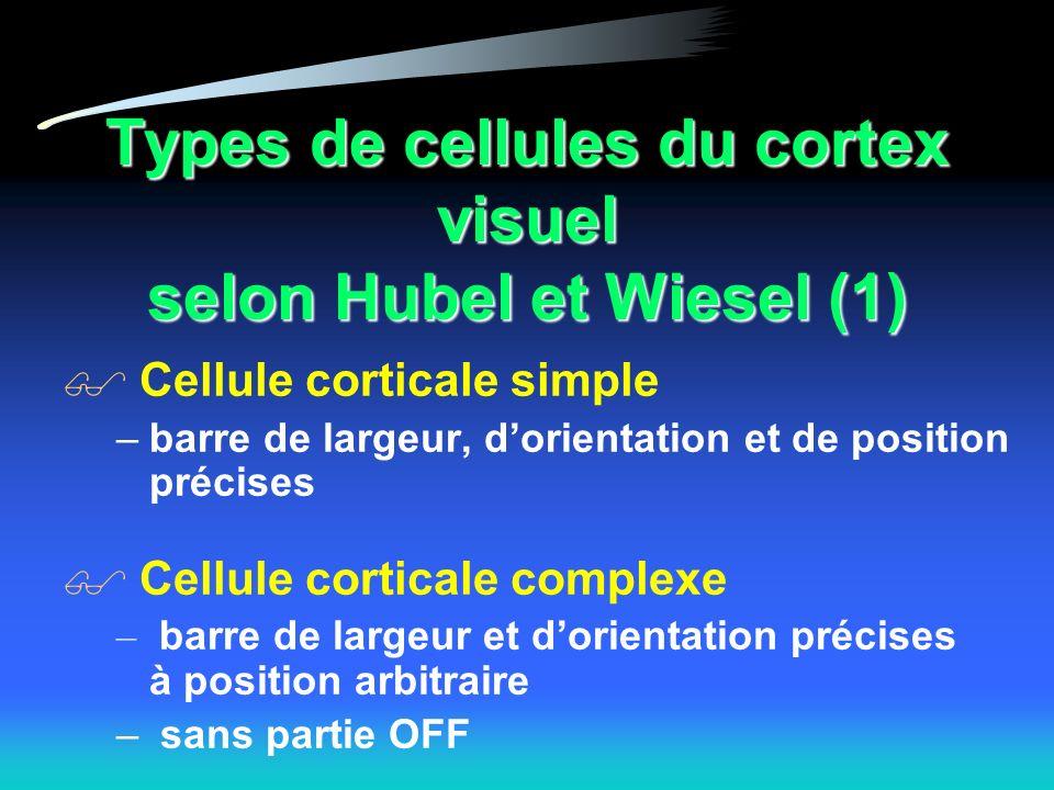 Types de cellules du cortex visuel selon Hubel et Wiesel (1)