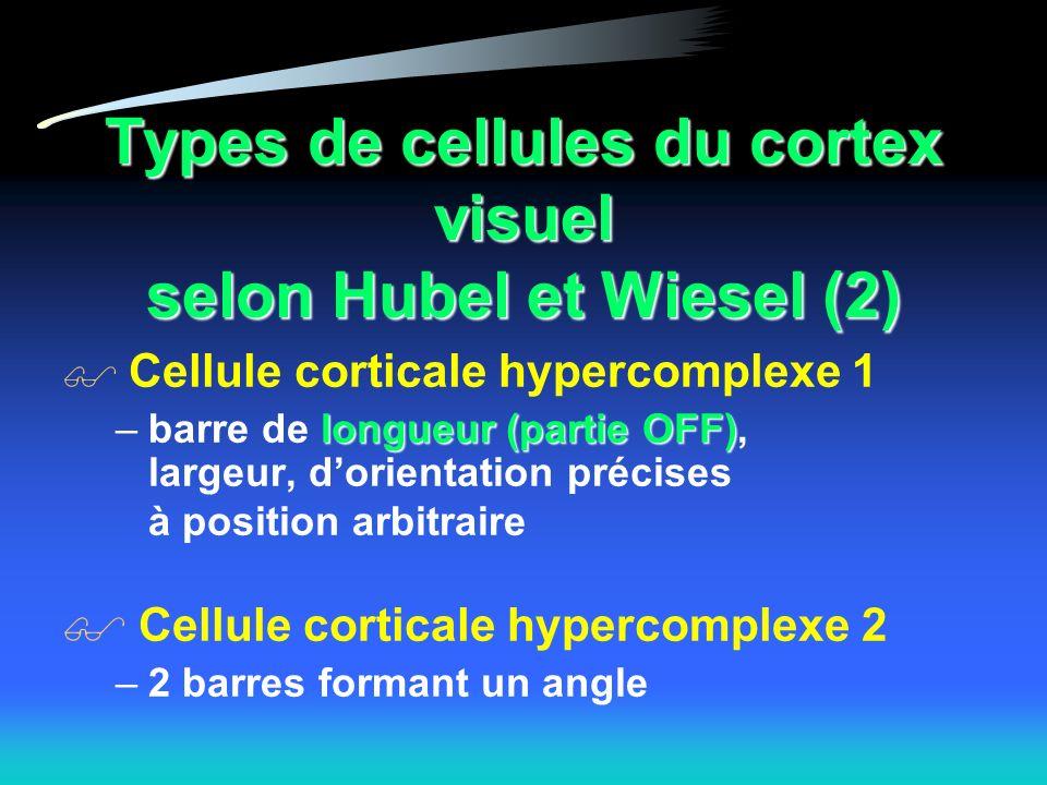 Types de cellules du cortex visuel selon Hubel et Wiesel (2)