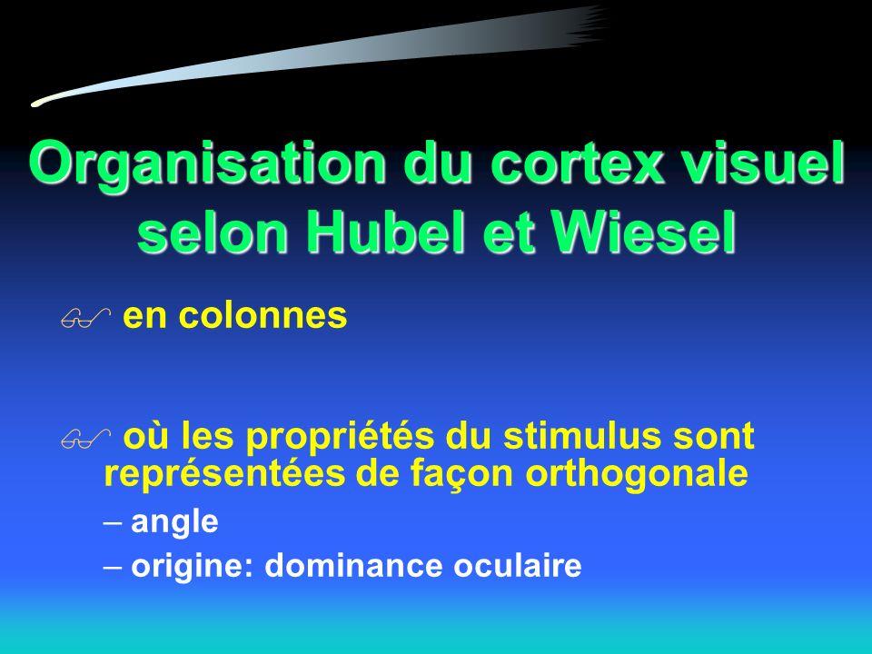 Organisation du cortex visuel selon Hubel et Wiesel