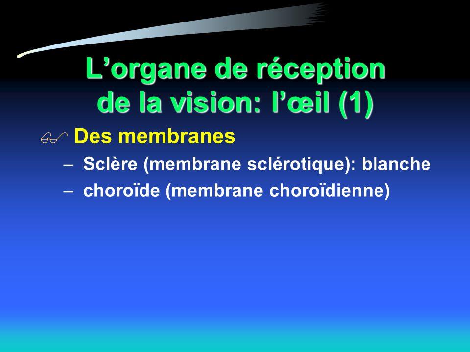 L'organe de réception de la vision: l'œil (1)