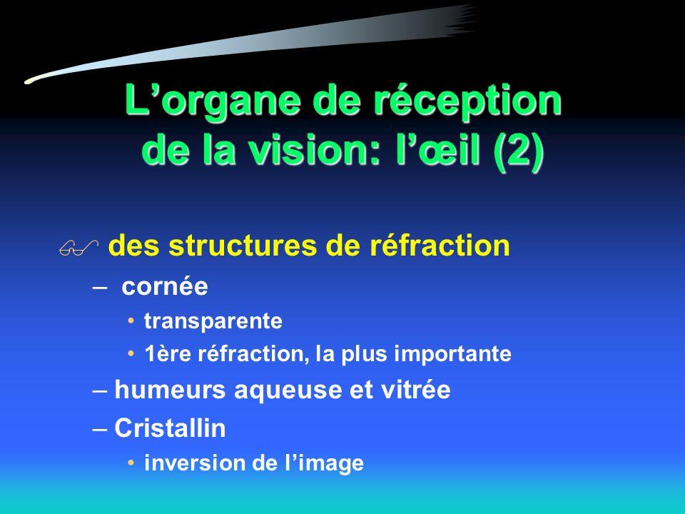 L'organe de réception de la vision: l'œil (2)