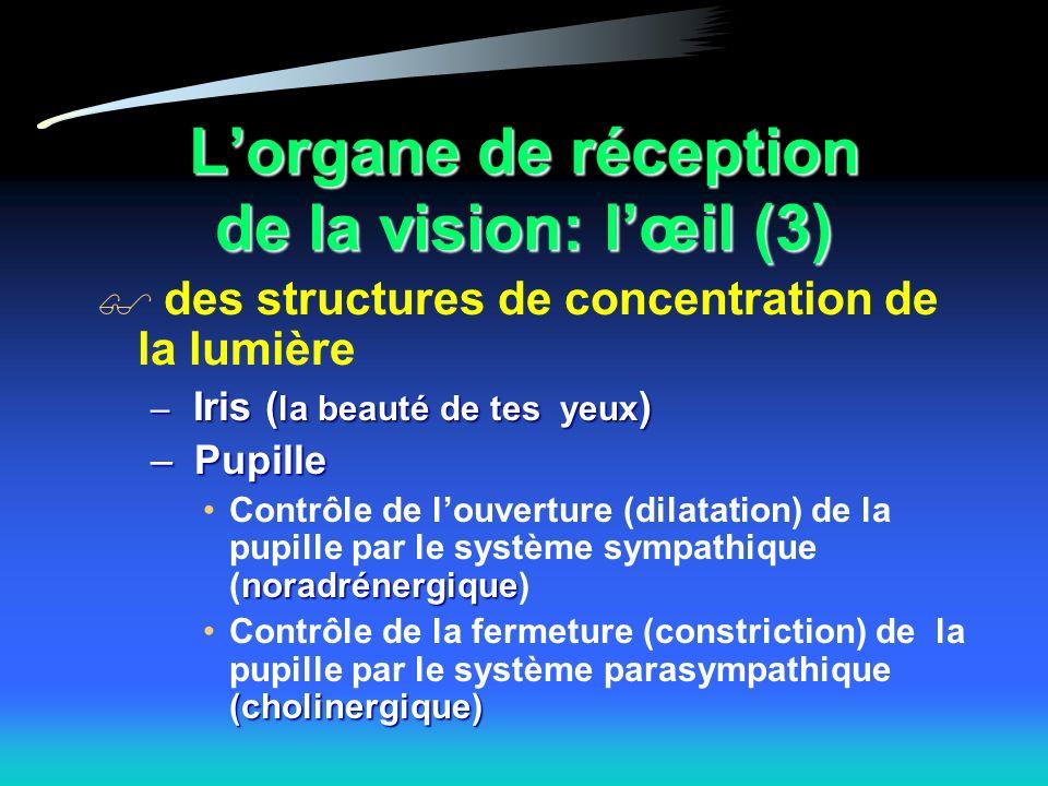 L'organe de réception de la vision: l'œil (3)