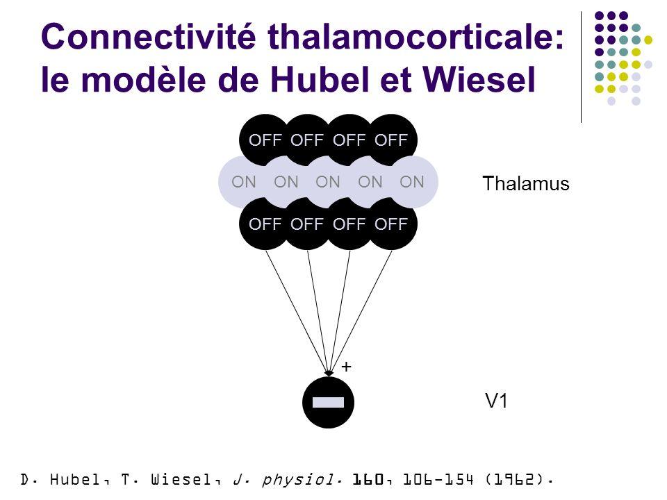 Connectivité thalamocorticale: le modèle de Hubel et Wiesel