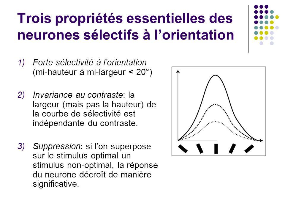 Trois propriétés essentielles des neurones sélectifs à l'orientation