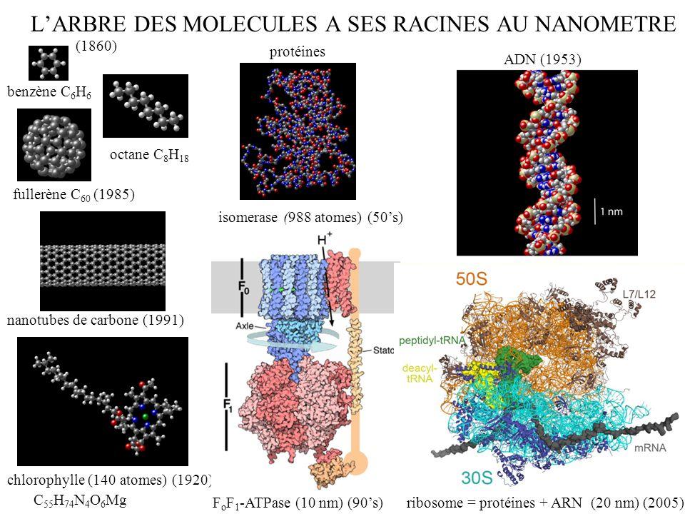 L'ARBRE DES MOLECULES A SES RACINES AU NANOMETRE