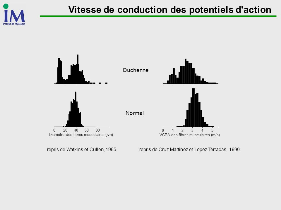 Vitesse de conduction des potentiels d action