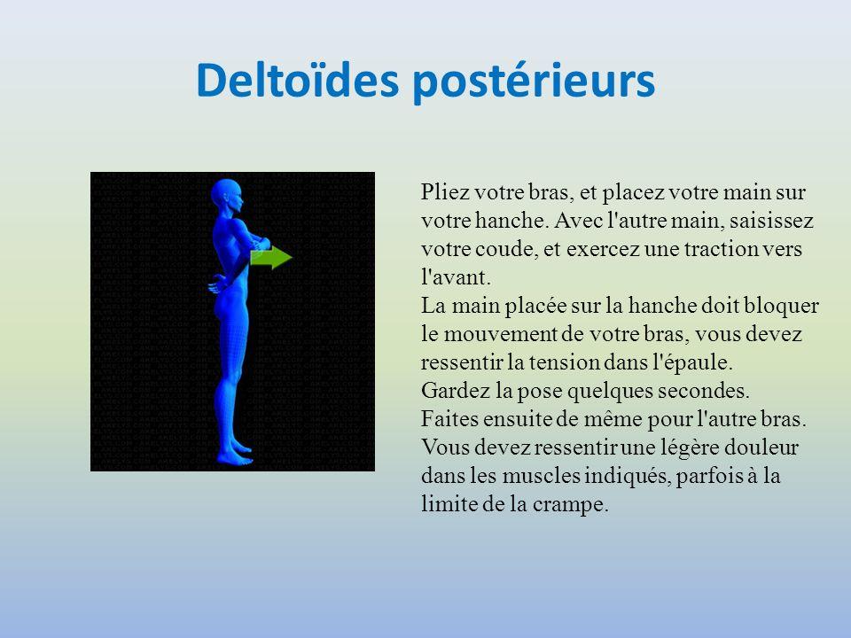 Deltoïdes postérieurs
