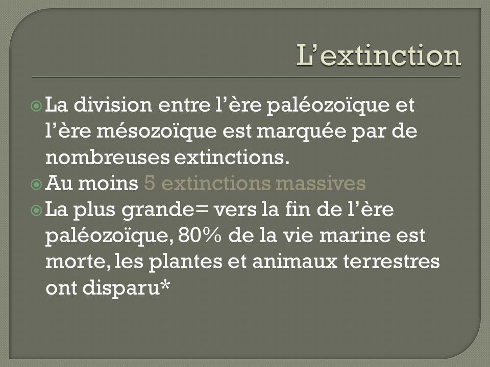 L'extinction La division entre l'ère paléozoïque et l'ère mésozoïque est marquée par de nombreuses extinctions.