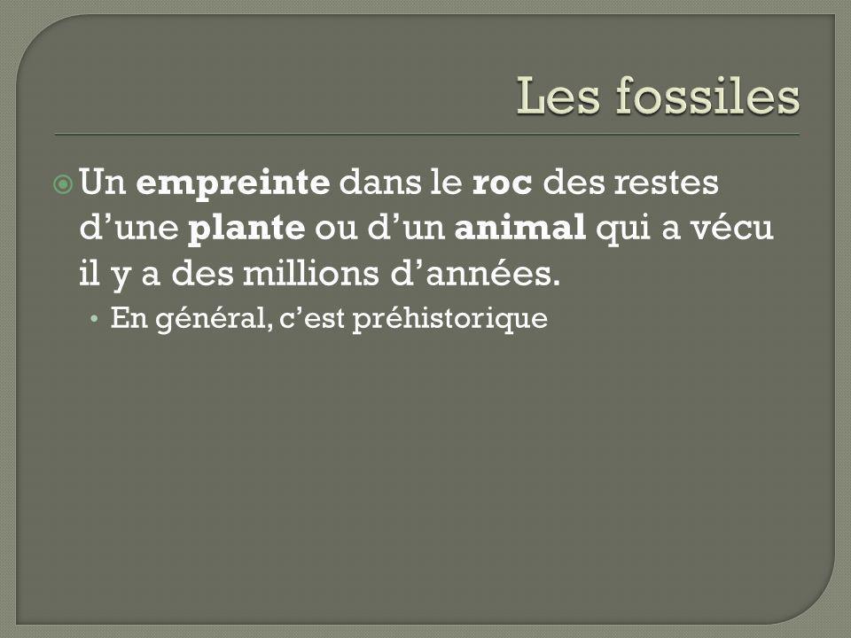 Les fossiles Un empreinte dans le roc des restes d'une plante ou d'un animal qui a vécu il y a des millions d'années.