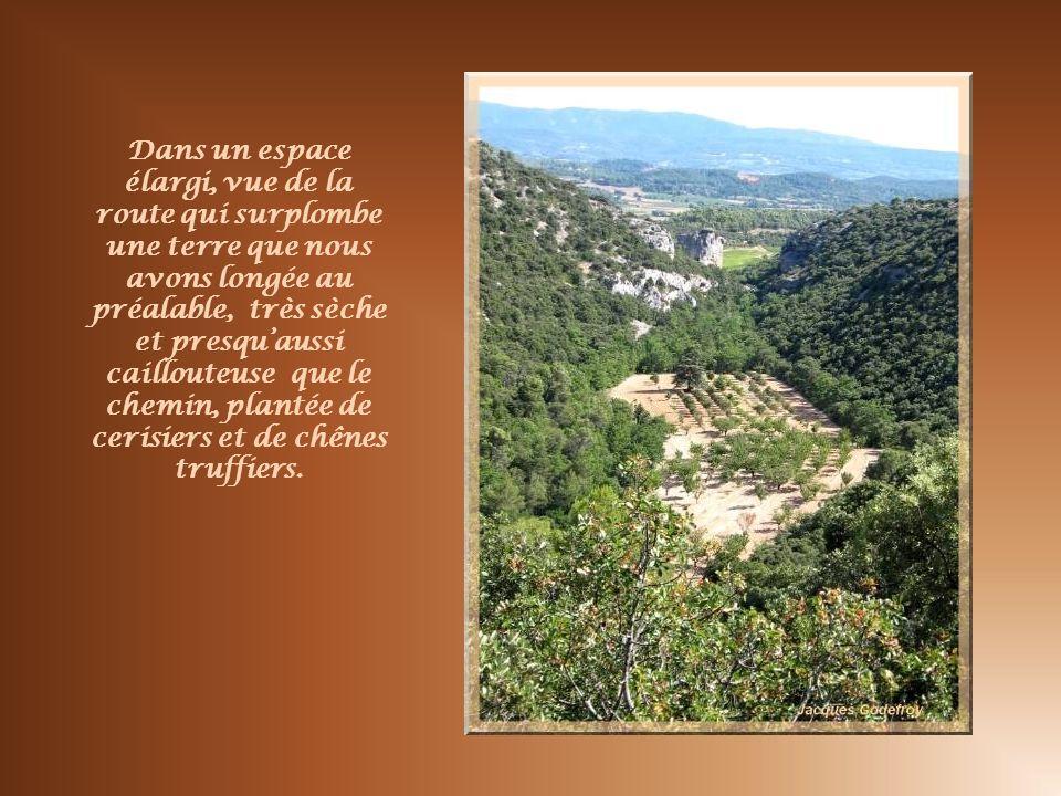 Dans un espace élargi, vue de la route qui surplombe une terre que nous avons longée au préalable, très sèche et presqu'aussi caillouteuse que le chemin, plantée de cerisiers et de chênes truffiers.