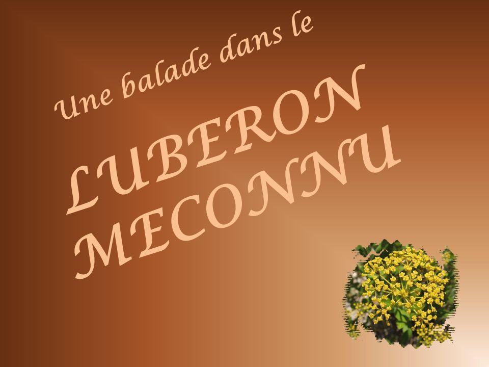 Une balade dans le LUBERON MECONNU