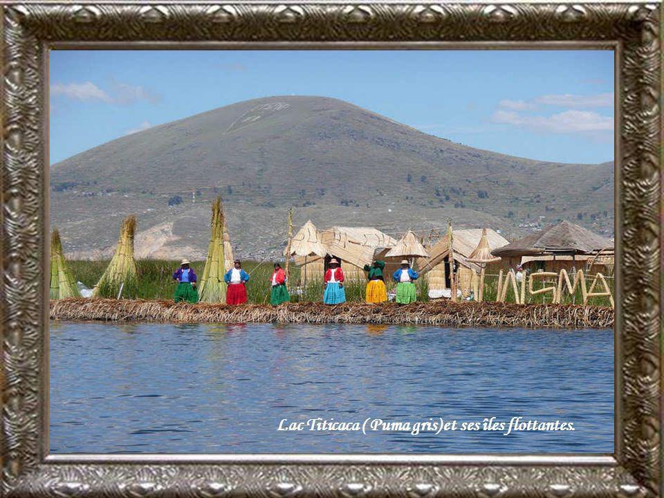 Lac Titicaca ( Puma gris) et ses îles flottantes.