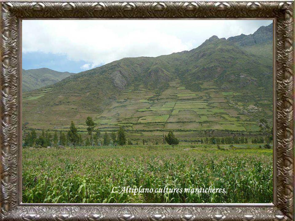 L'Altiplano cultures maraichères.