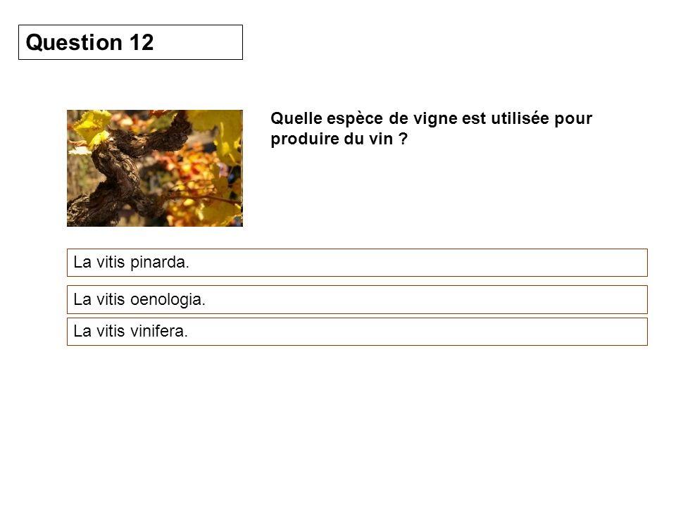 Question 12 Quelle espèce de vigne est utilisée pour produire du vin