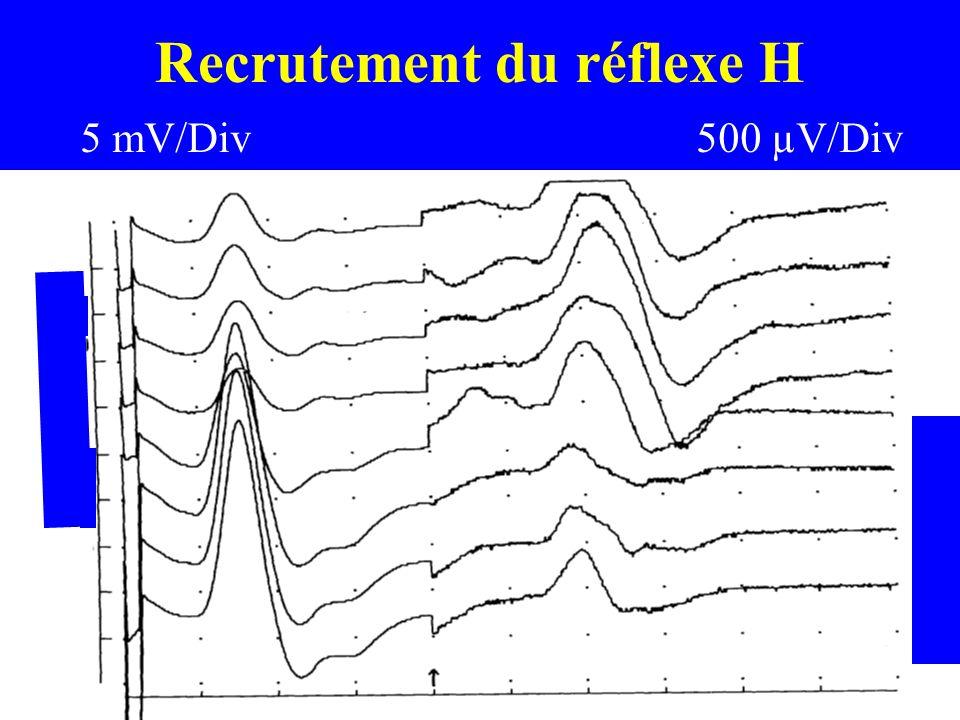 Recrutement du réflexe H