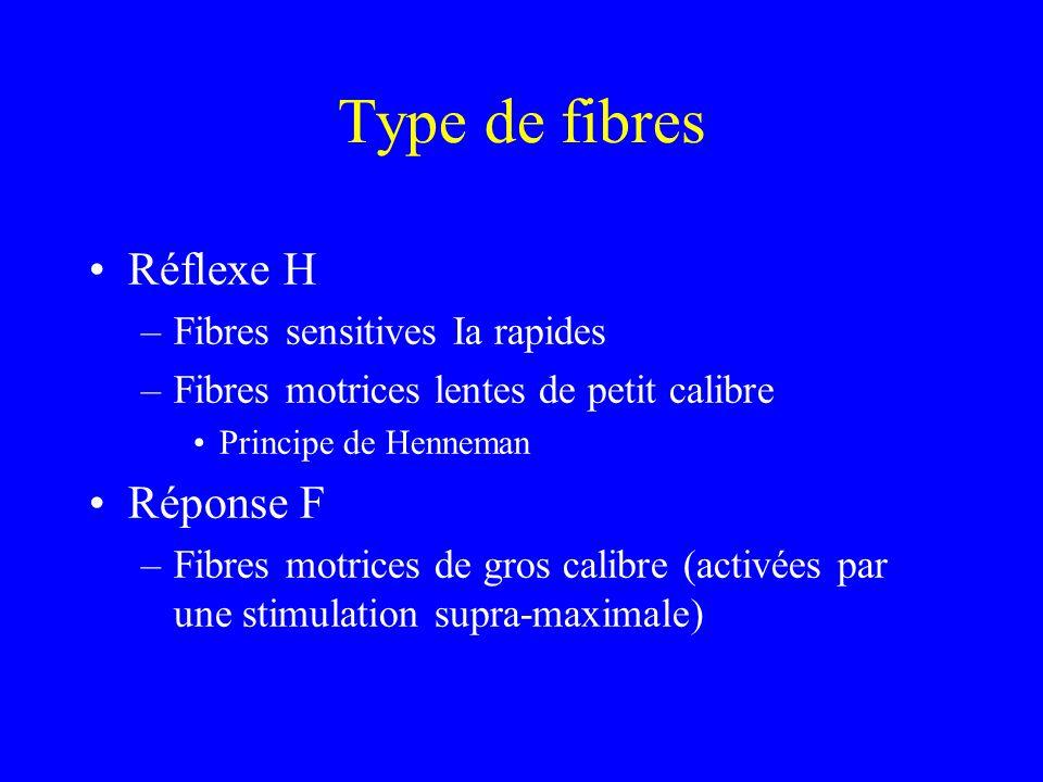 Type de fibres Réflexe H Réponse F Fibres sensitives Ia rapides