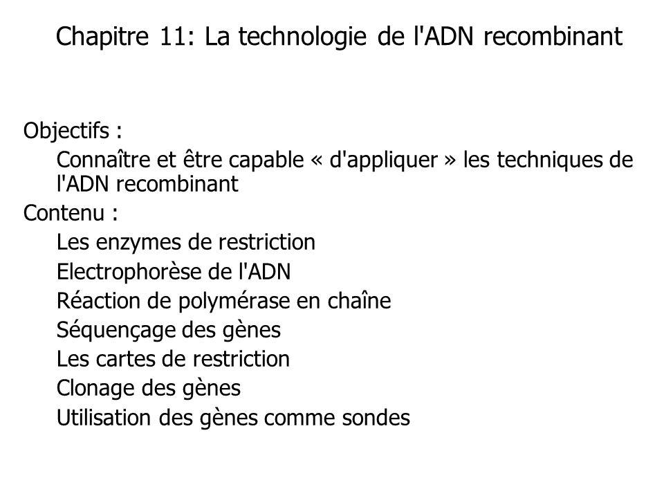 Chapitre 11: La technologie de l ADN recombinant