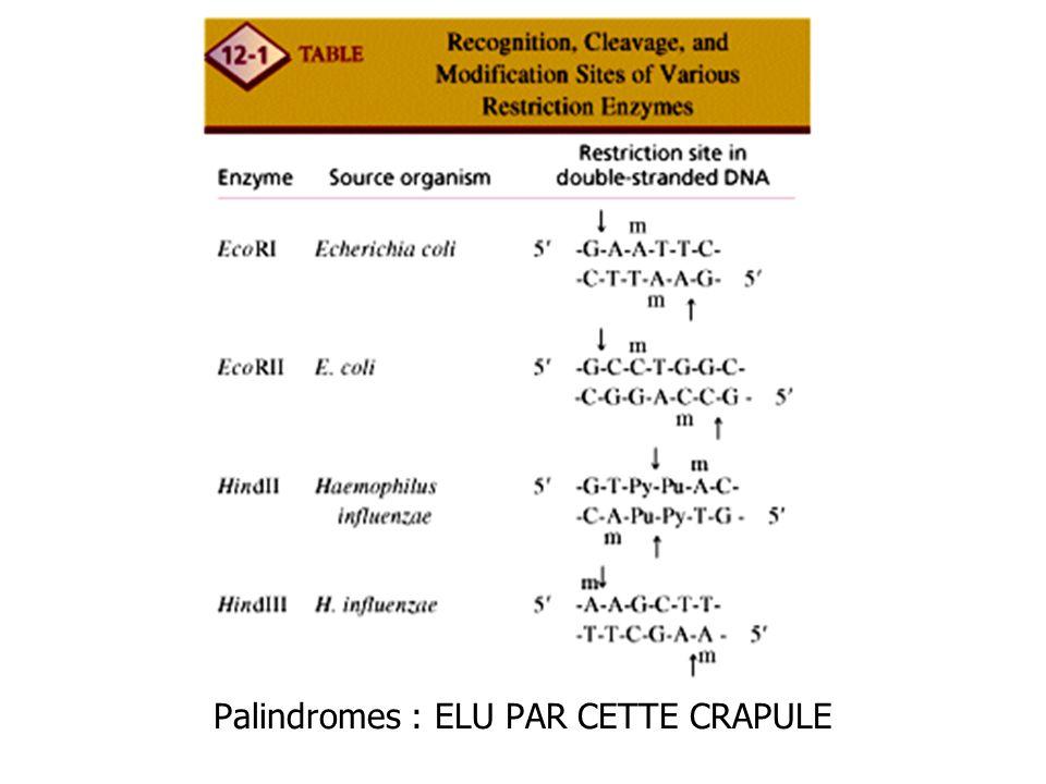 Palindromes : ELU PAR CETTE CRAPULE