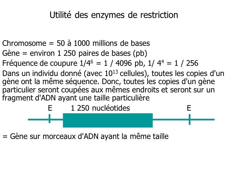 Utilité des enzymes de restriction