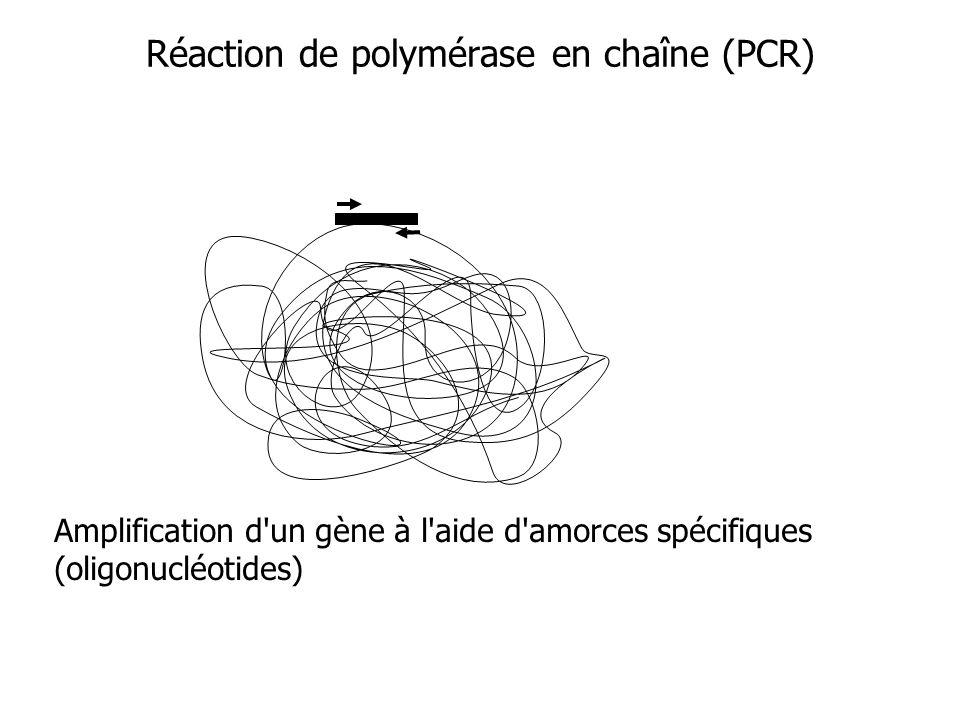 Réaction de polymérase en chaîne (PCR)