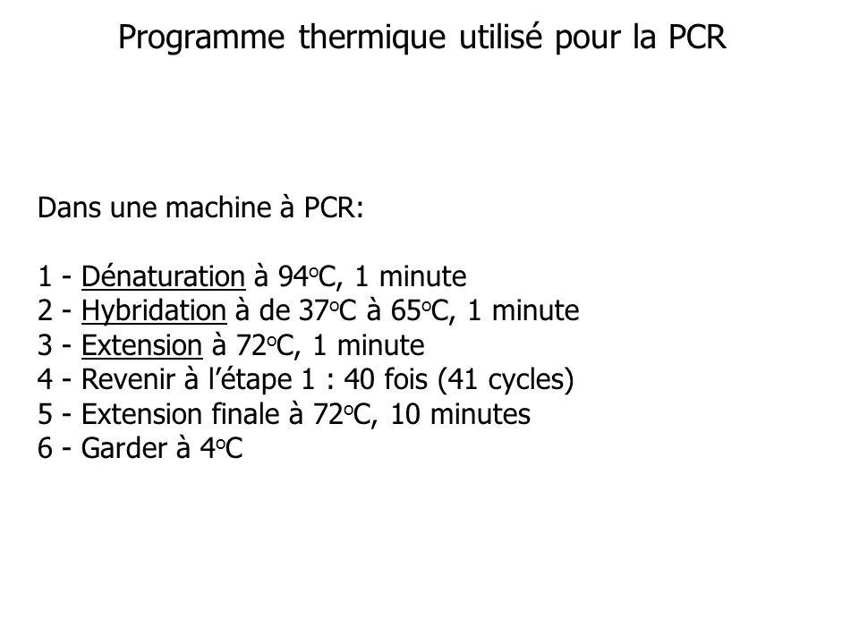 Programme thermique utilisé pour la PCR