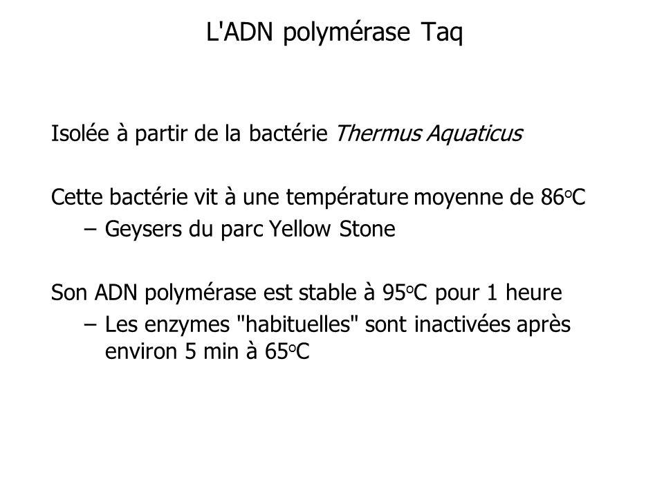 L ADN polymérase Taq Isolée à partir de la bactérie Thermus Aquaticus
