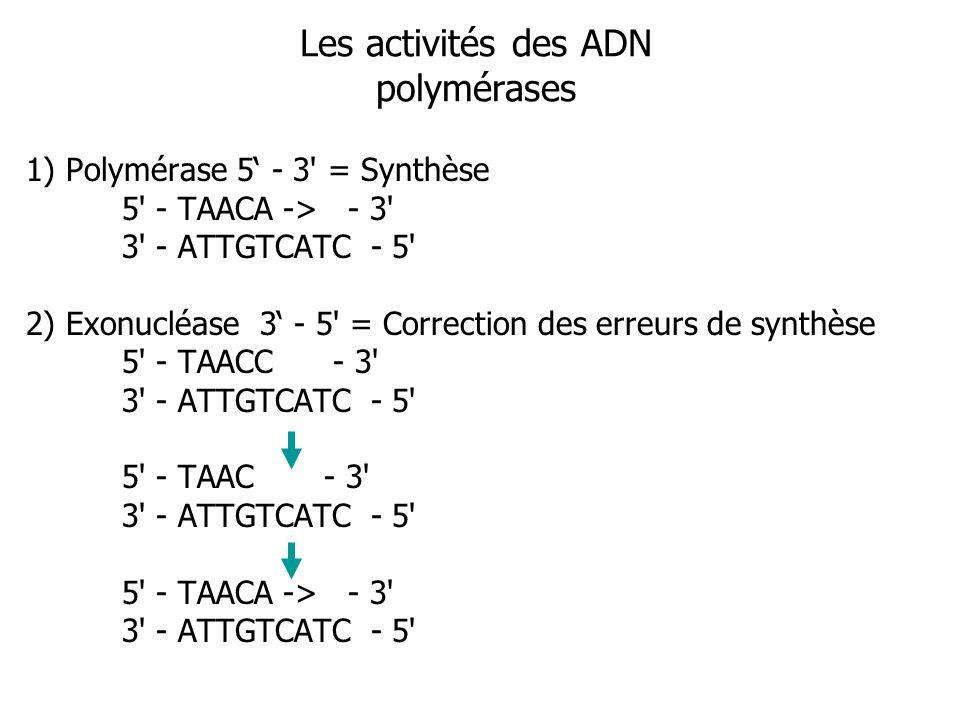 Les activités des ADN polymérases