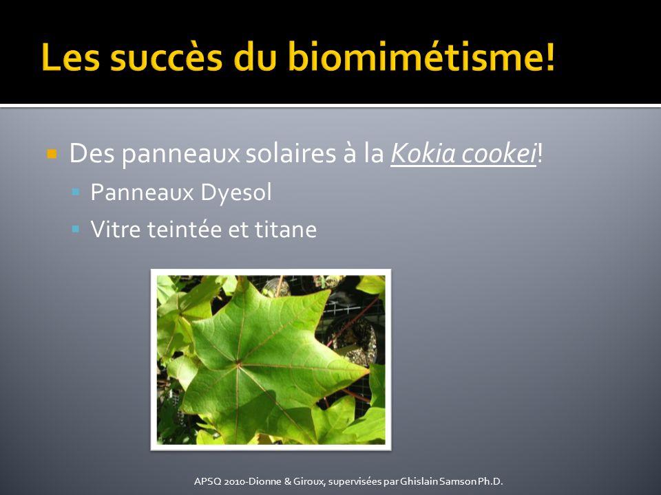 Les succès du biomimétisme!