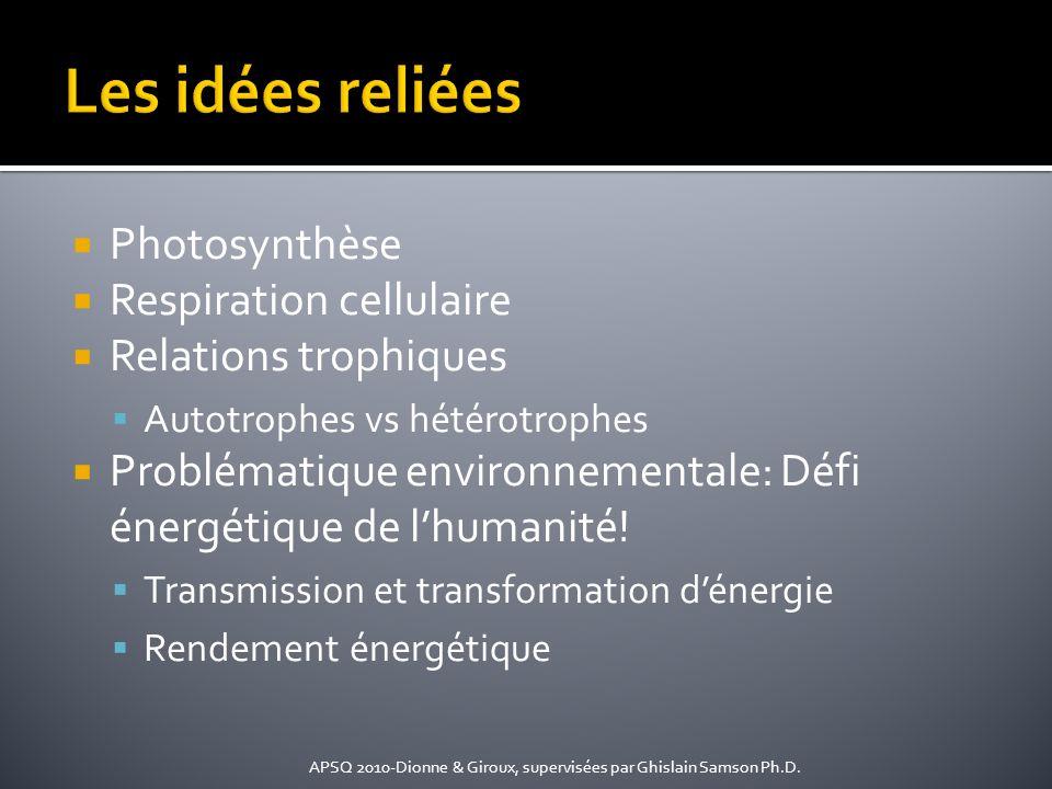 Les idées reliées Photosynthèse Respiration cellulaire