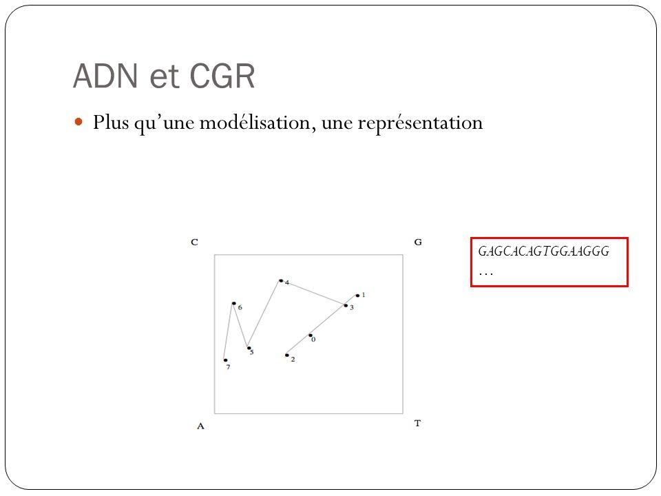 ADN et CGR Plus qu'une modélisation, une représentation