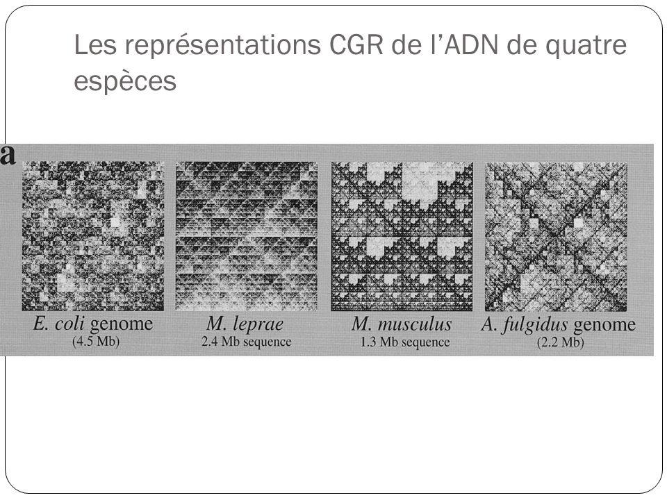Les représentations CGR de l'ADN de quatre espèces