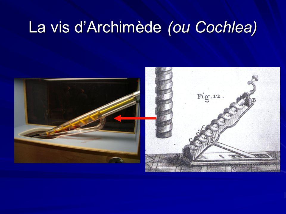 La vis d'Archimède (ou Cochlea)