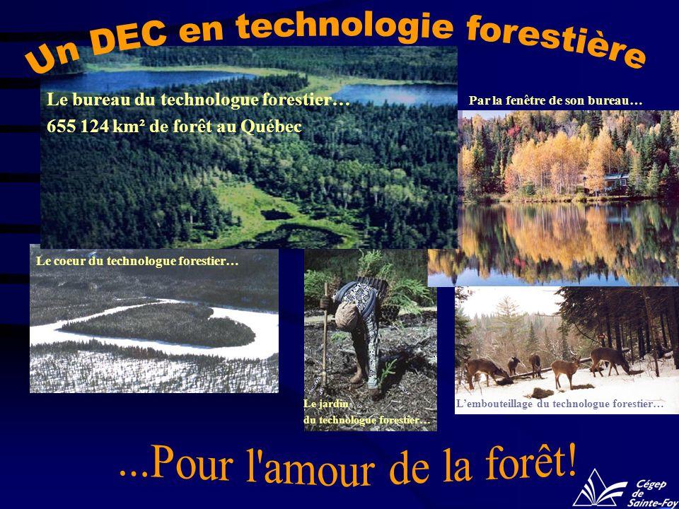 Un DEC en technologie forestière