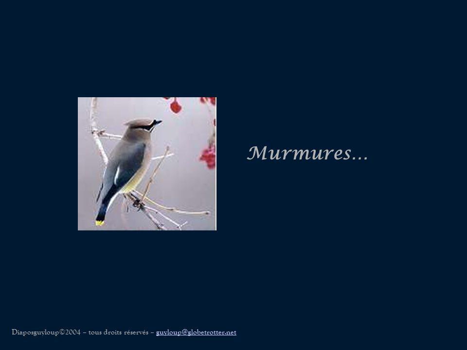 Murmures… Diaposguyloup©2004 – tous droits réservés – guyloup@globetrotter.net