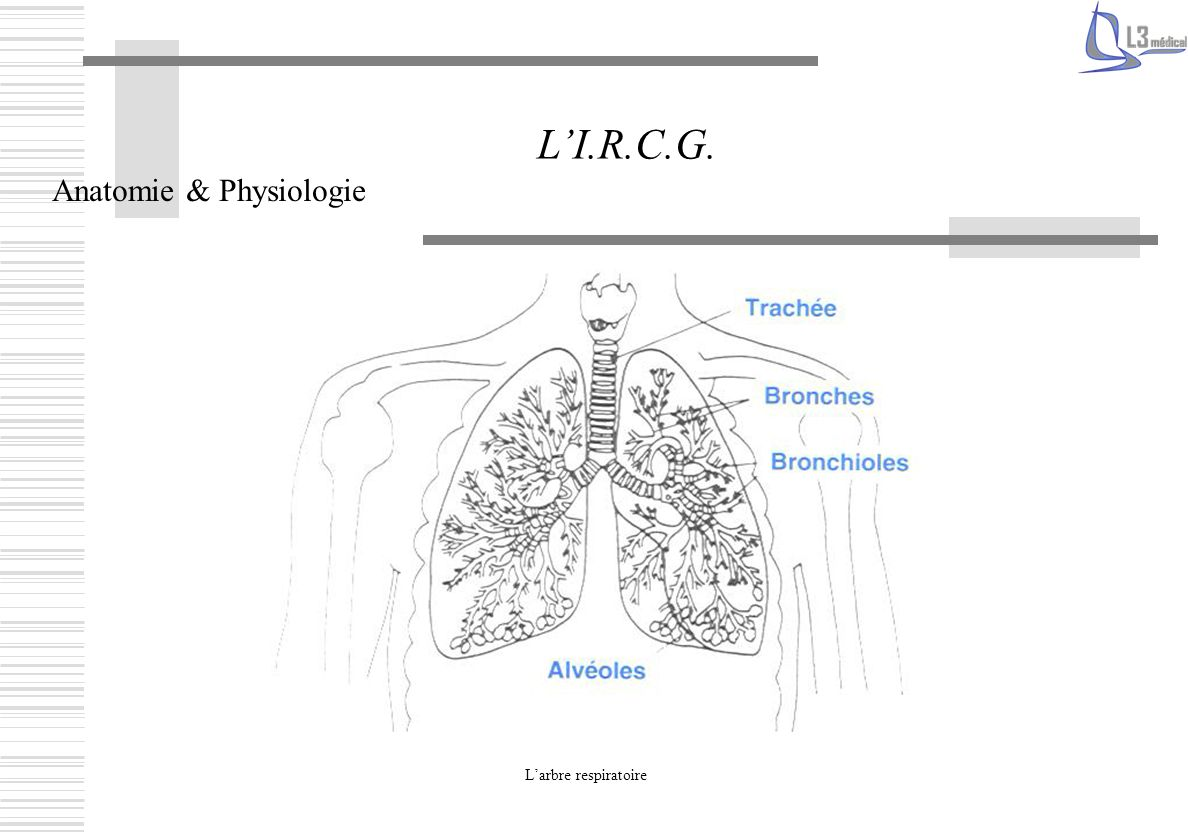 L'I.R.C.G. Anatomie & Physiologie