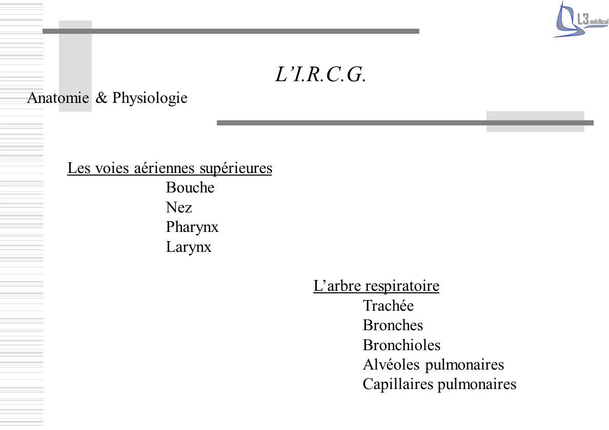 L'I.R.C.G. Anatomie & Physiologie Les voies aériennes supérieures