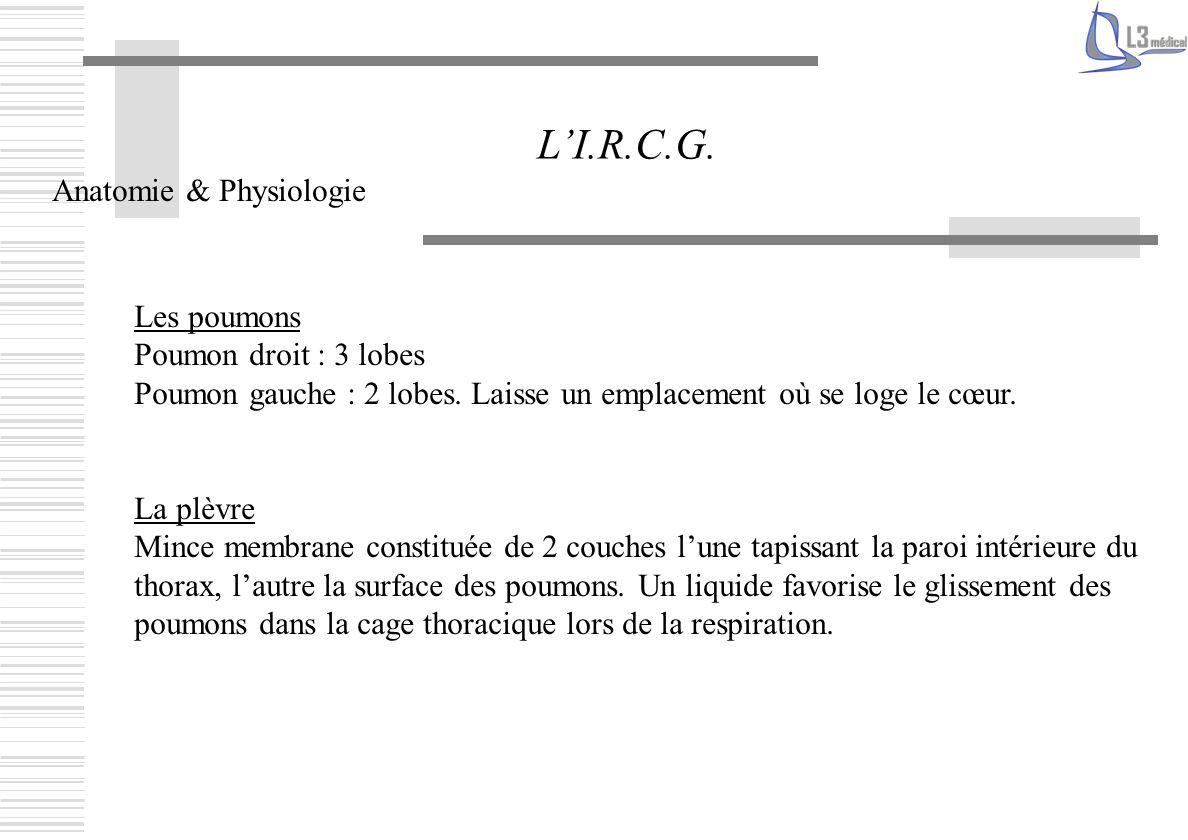 L'I.R.C.G. Anatomie & Physiologie Les poumons Poumon droit : 3 lobes
