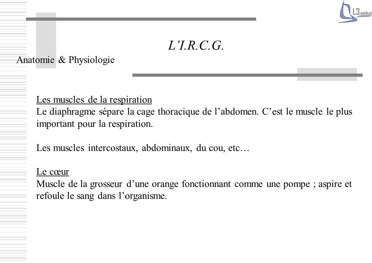 L'I.R.C.G. Anatomie & Physiologie Les muscles de la respiration