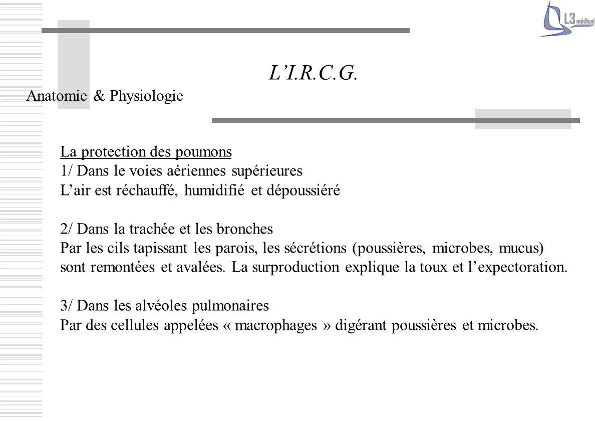 L'I.R.C.G. Anatomie & Physiologie La protection des poumons