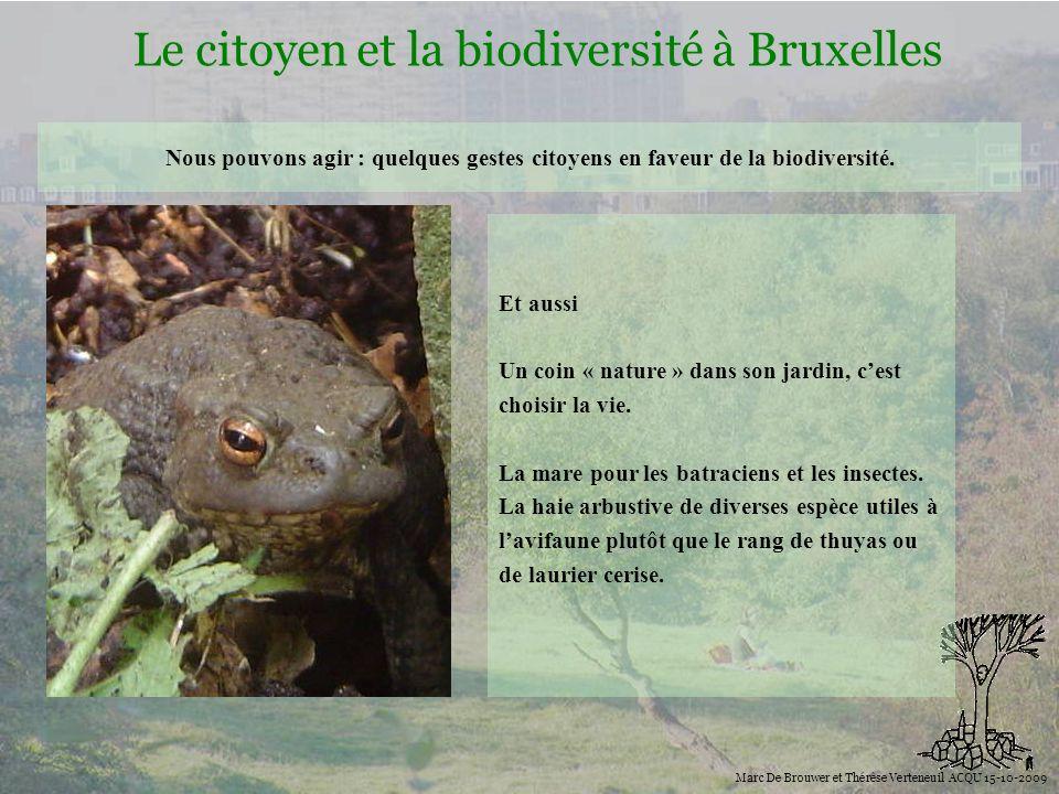 Le citoyen et la biodiversité à Bruxelles