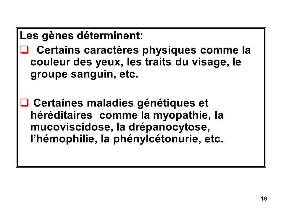 Les gènes déterminent: